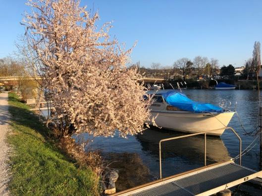 Aare river.JPG